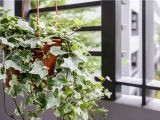 Low-Maintenance Plants for Cleaner and Healthier Air